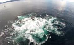imagini-spectaculoase-filmate-de-o-drona-deasupra-apelor-din-alaska-315896