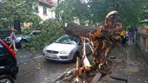 copac-cazut-in-urma-furtunii