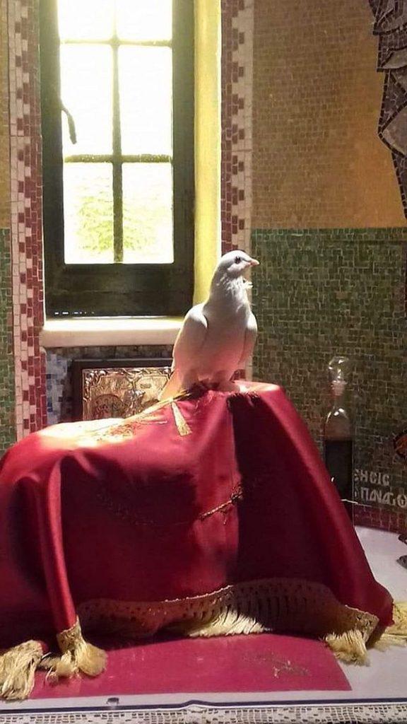 Porumbelul care a intrat în altar la Kato Xenia pe Potir
